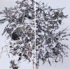 Cain-Patricia-Thicket_II